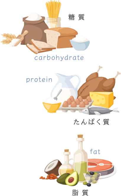 Carbohydrate Protein Fat